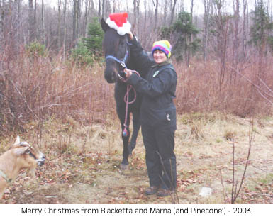 Blacketta in a Santa Hat & Pinecone