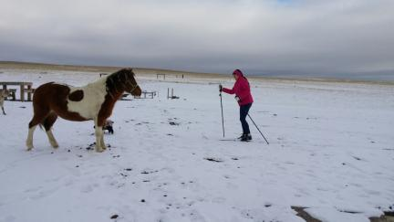 Marna CC Skiing Dream Maker pony, Joy the Cocker